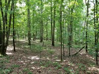 Fire Tower Tract : Ramer : McNairy County : Tennessee