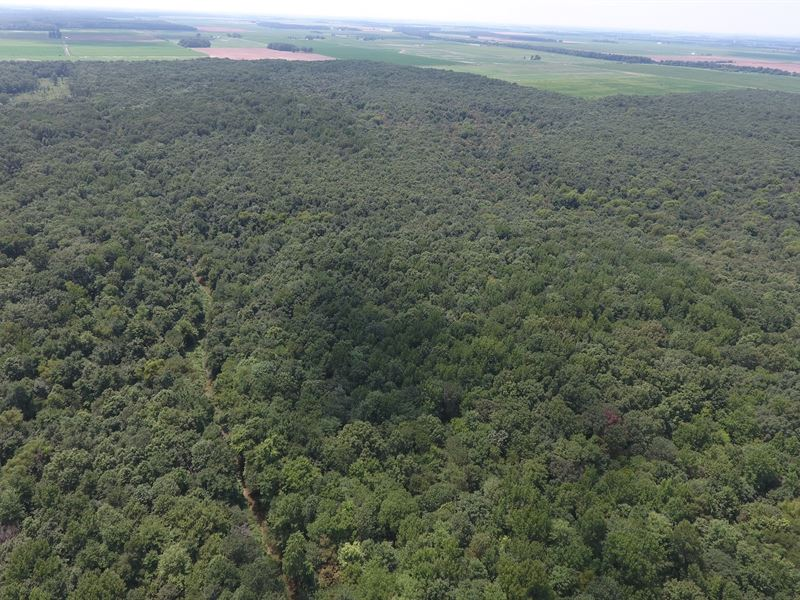 40 Acres Timber In Bayou Deview Wma : Weiner : Poinsett County : Arkansas