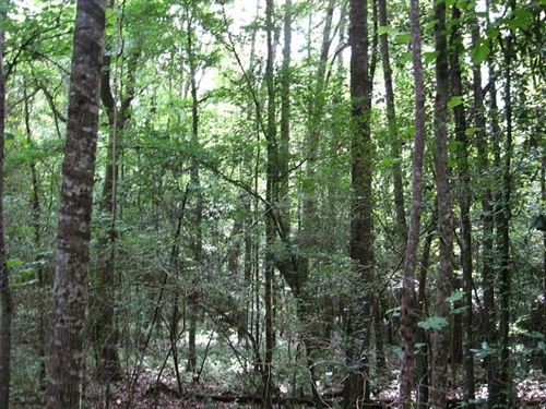 71.18 Acres in Purvis, MS : Purvis : Lamar County : Mississippi