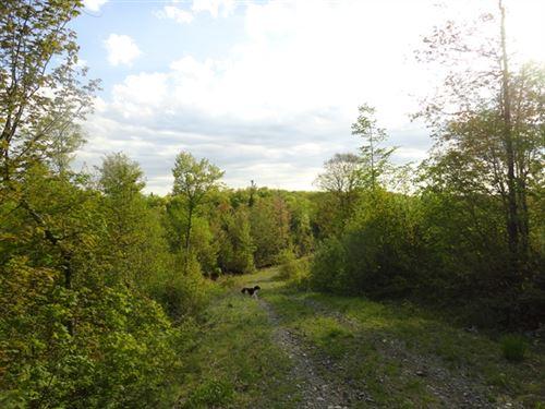 80 Acres in Republic, MI : Republic : Marquette County : Michigan