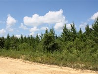 323.40 Acres in Shuqualak, MS : Shuqualak : Noxubee County : Mississippi