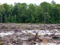 192.51 Acres in Saint George, SC : Saint George : Dorchester County : South Carolina