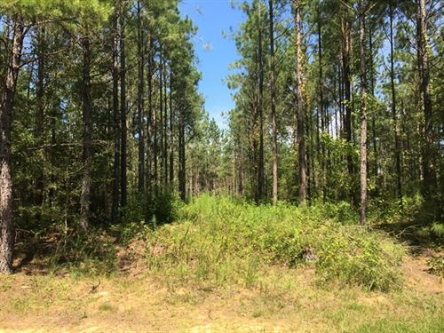 115.56 Acres in Prentiss, MS : Prentiss : Lawrence County : Mississippi