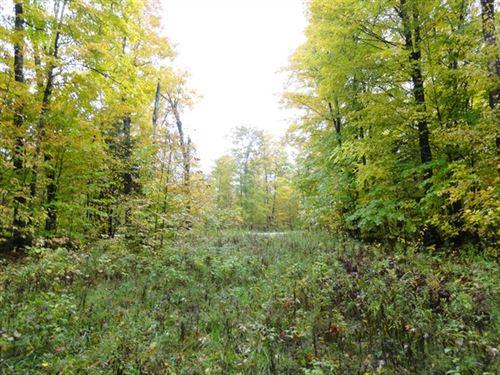 47 Acres in Newberry, MI : Newberry : Schoolcraft County : Michigan
