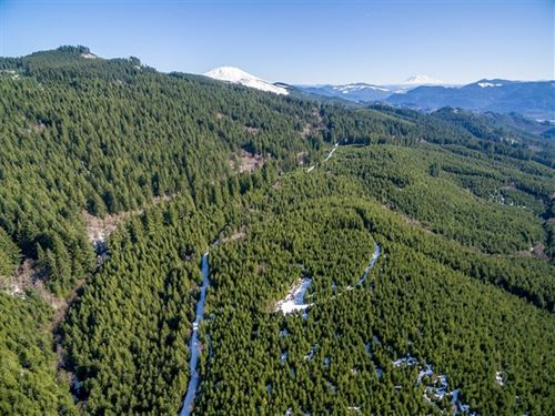 322.73 Acres in Amboy, WA : Amboy : Cowlitz County : Washington
