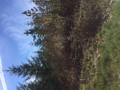 155.20 Acres in Lebanon, OR : Lebanon : Linn County : Oregon