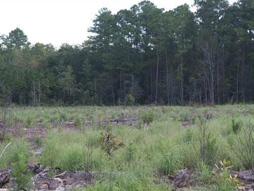 41.99 Acres in Walterboro, SC : Walterboro : Colleton County : South Carolina