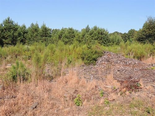 54.95 Acres in Talbotton, GA : Talbotton : Talbot County : Georgia