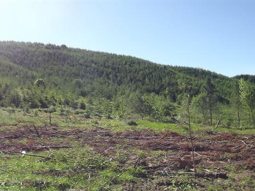 7.76 Acres in Yoncalla, OR : Yoncalla : Lane County : Oregon
