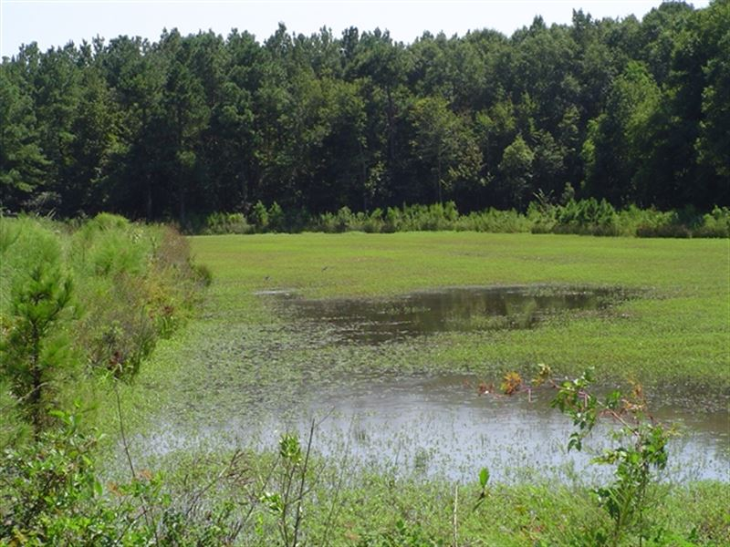 159.25 Acres in Moncks Corner, SC : Moncks Corner : Berkeley County : South Carolina
