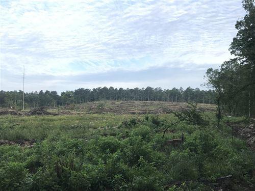 80 Acres in Amity, AR : Amity : Hot Spring County : Arkansas