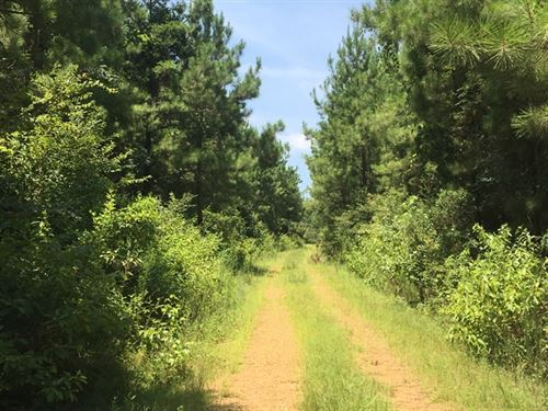 554.27 Acres in Monticello, MS : Monticello : Lawrence County : Mississippi