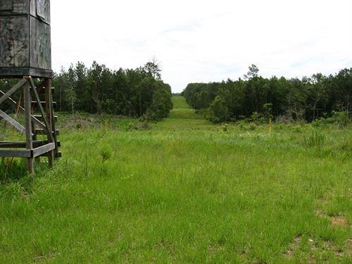 34.80 Acres in Wiggins, MS : Wiggins : Forrest County : Mississippi