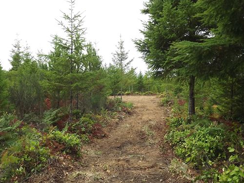 15.71 Acres in Skokomish, WA : Skokomish : Mason County : Washington