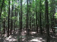 12.59 Acres in Haynesville, LA : Haynesville : Claiborne Parish : Louisiana