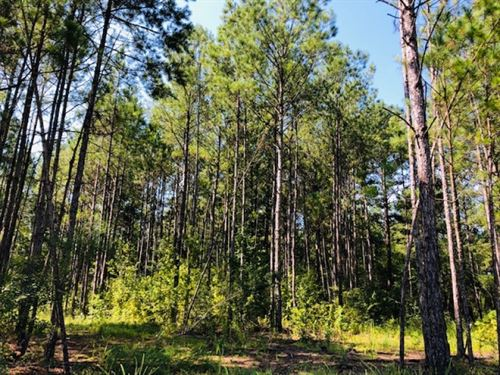 88 Acres / North Of Columbia / MS : Columbia : Marion County : Mississippi