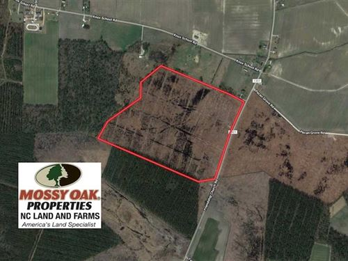 76 Acres of Cut Timberland For Sal : Farmville : Greene County : North Carolina