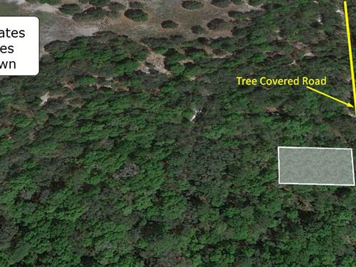 .22 Acre Lot On Tree Covered Road : Inverness : Citrus County : Florida