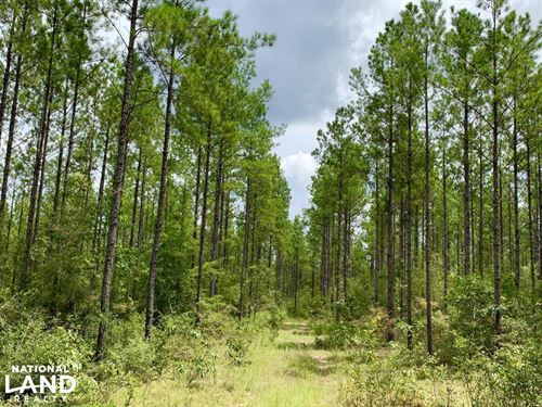 Benton Hunting And Timber Investmen : Citronelle : Mobile County : Alabama