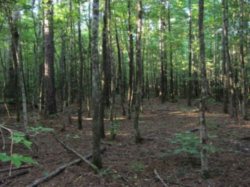 20 Acres In Alcorn County In Rienzi : Rienzi : Alcorn County : Mississippi