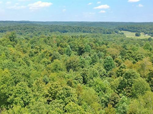 Hunting Property Parsons, TN 38363 : Parsons : Decatur County : Tennessee