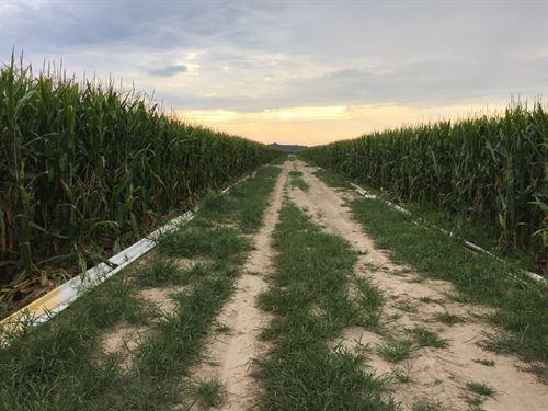 Northeast Arkansas Quality Cropland : Bay : Craighead County : Arkansas