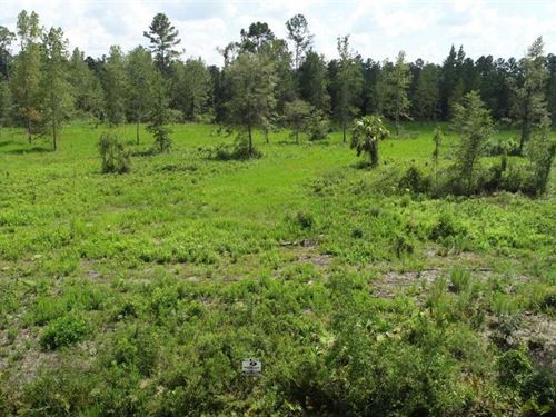 4.74 Acres Land For Sale Colerain : Kingsland : Camden County : Georgia