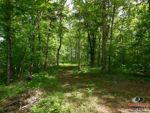 Kentucky Timber Land for Sale : LANDFLIP