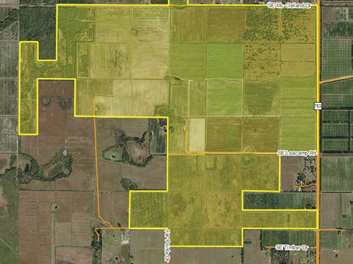 Farm & Solar Opportunity : Arcadia : DeSoto County : Florida