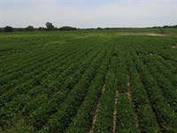 130 Acre Tillable Farm For Sale : Independence : Montgomery County : Kansas