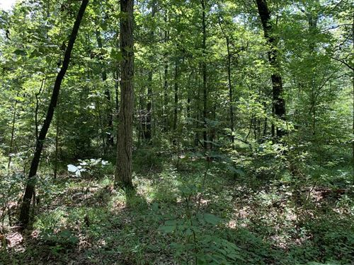 60 Timberland Priced at Appraise : Beebe : White County : Arkansas