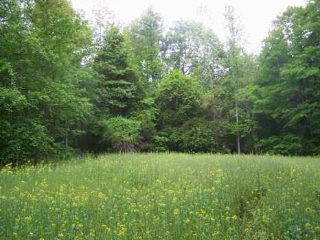 99+/- Acres Prime Hunting Land : Denver Community : Tallapoosa County : Alabama