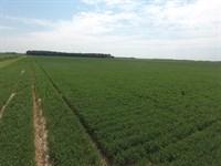 80 Acre Precision Leveled Farm : Balch : Jackson County : Arkansas