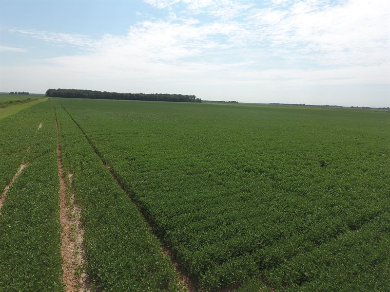 80 Acre Precision Leveled Farm : Balch : Jackson County : Arkansas