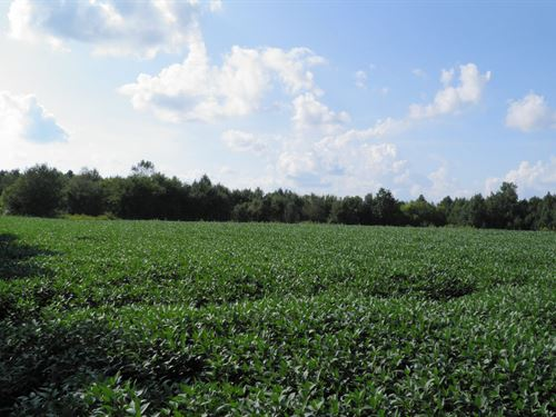 Perfect Development Property : Beechgrove : Coffee County : Tennessee