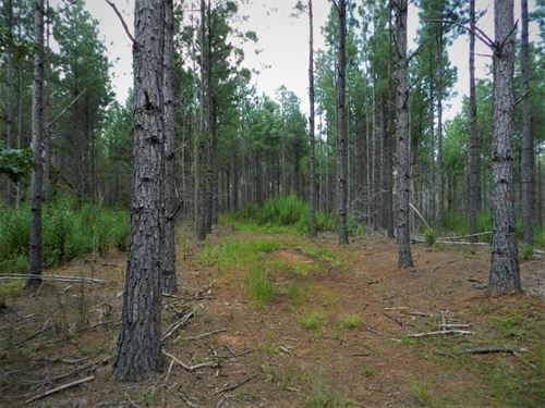 Lake Country Timber Investment : Greensboro : Greene County : Georgia