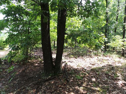 Acreage Near Bull Shoals Lake : Peel : Marion County : Arkansas