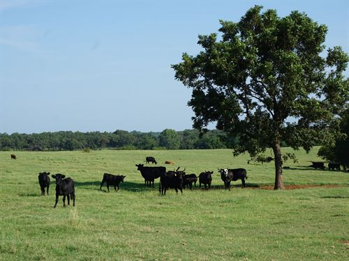 No Reserves 80 Acres Land Auction : Carney : Lincoln County : Oklahoma