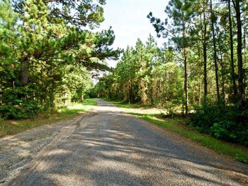 Development Timber Land, 18.8 Acre : Sailes : Bienville Parish : Louisiana