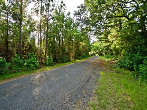 Development Timber Land, 13 Acres : Sailes : Bienville Parish : Louisiana