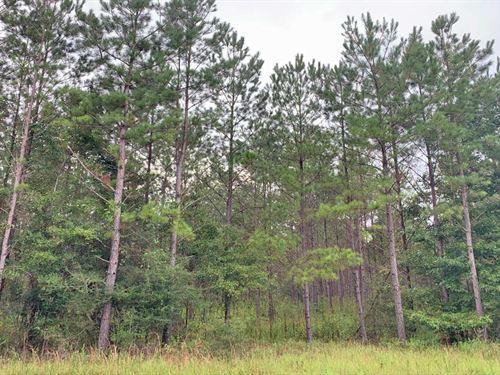 Garden Road : McKenzie : Covington County : Alabama