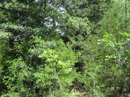 3 Acres Of Land In Tx With Trees : Eustace : Henderson County : Texas
