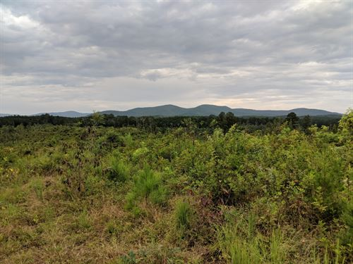 57+/- Acres In Northern Cleburne Co : Fruithurst : Cleburne County : Alabama