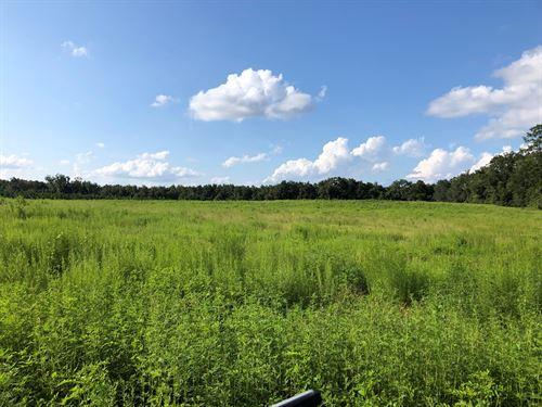18.55 Gorgeous Acres Rolling : Lake City : Columbia County : Florida