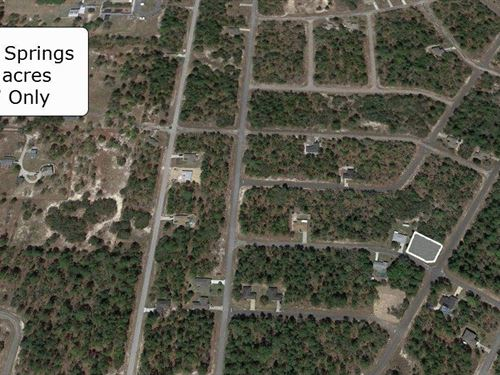 .29 Acre Corner Lot On Paved Road : Citrus Springs : Citrus County : Florida