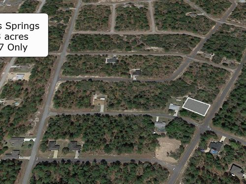 Pristine .23 Acre In Citrus Springs : Citrus Springs : Citrus County : Florida