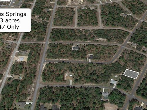 .23 Acre Lot On A Paved Road : Citrus Springs : Citrus County : Florida