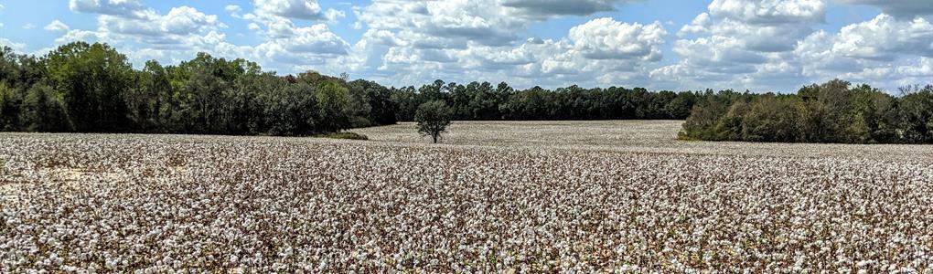 Cropland Big Timber and Huge Deer : Slocomb : Houston County : Alabama