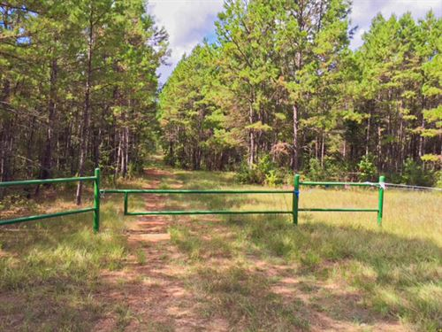 192 Acres FM 323 : Elkhart : Anderson County : Texas