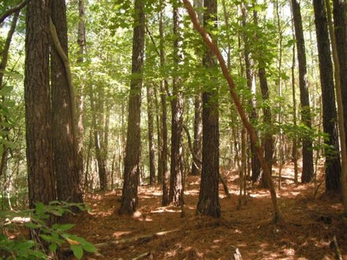 32 Acres, Chester County, Sc : Chester : South Carolina